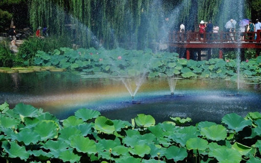 Immagine di 7V Solar Power Floating Brushless Water Pump Garden Landscape Submersible Fountain