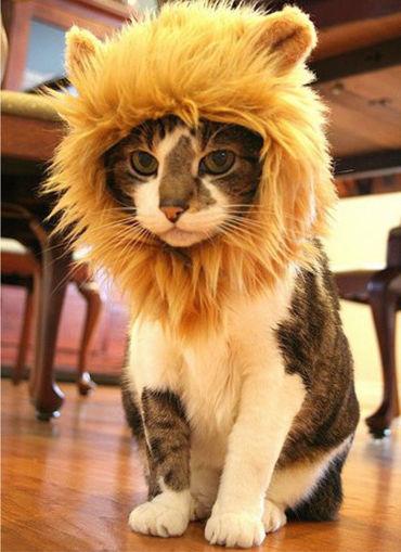 Immagine di S Pet Dog Cat Artificial Lion Mane Wig Halloween Costume